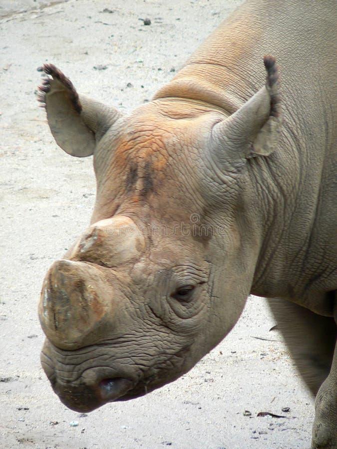 Rinoceros 2 Royalty-vrije Stock Afbeeldingen