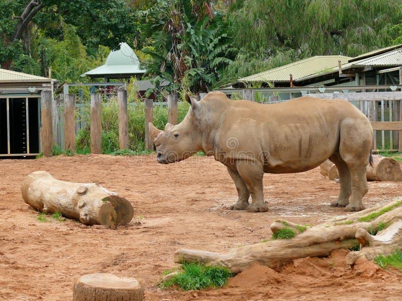 Rinoceros in dierentuin stock foto's