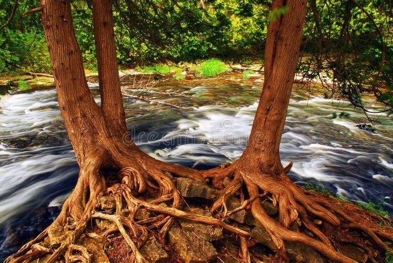 Rio fotografia de stock royalty free