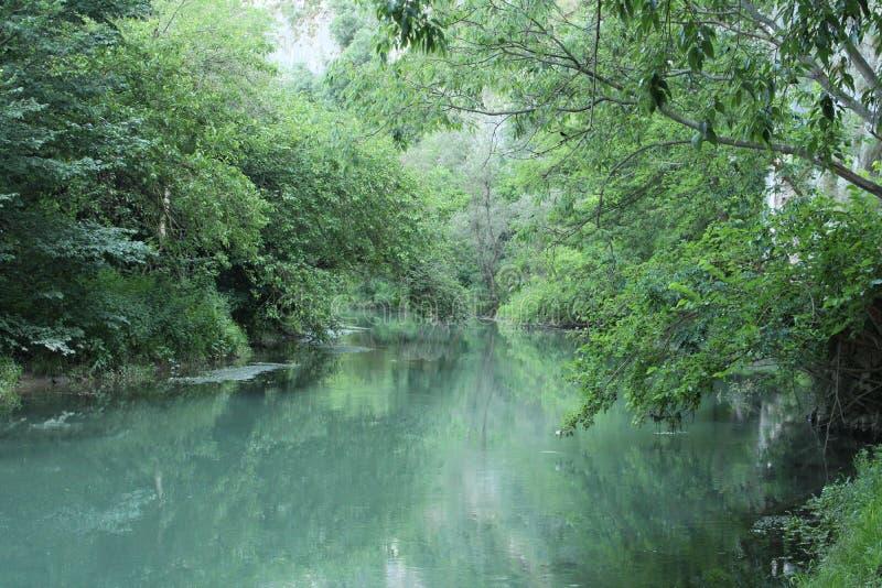 Rio agradável na floresta foto de stock royalty free