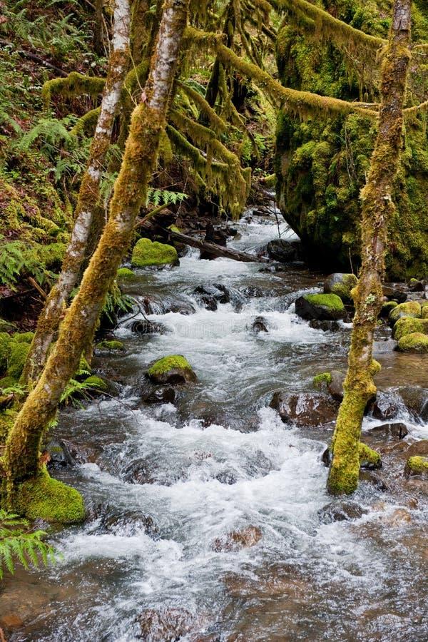 Rio através das madeiras mossy foto de stock royalty free
