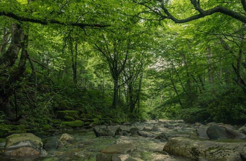 Rio através do interior de uma floresta foto de stock