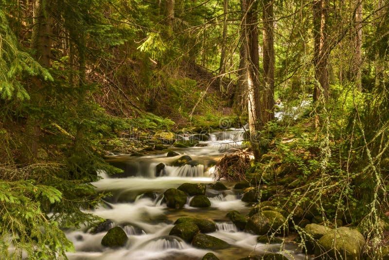 Rio Bistrita no verão imagens de stock