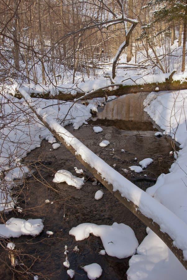 Rio bonito do inverno na floresta nevado imagem de stock