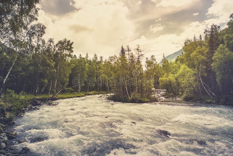 Rio bonito na natureza da floresta Fundo tonificado calmo da natureza fotografia de stock
