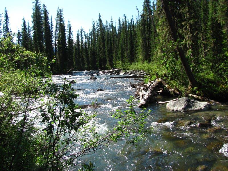 Rio brilhante cercado pelo taiga Siberian fotografia de stock royalty free