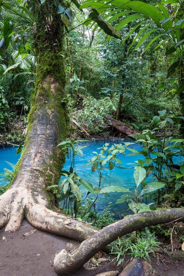 Rio Celeste, Costa Rica royalty-vrije stock foto's