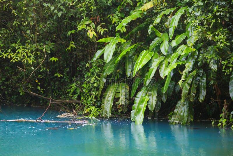 Rio celeste en vegetatie stock foto's