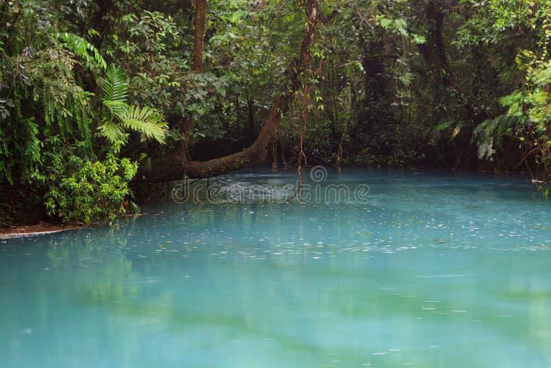 Rio celeste en vegetatie royalty-vrije stock foto's