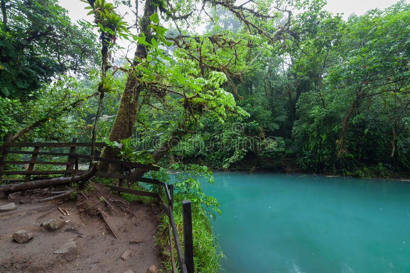 Rio celeste en weelderig regenwoud royalty-vrije stock foto's