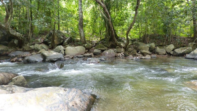 Rio com as grandes rochas cercadas por árvores foto de stock royalty free
