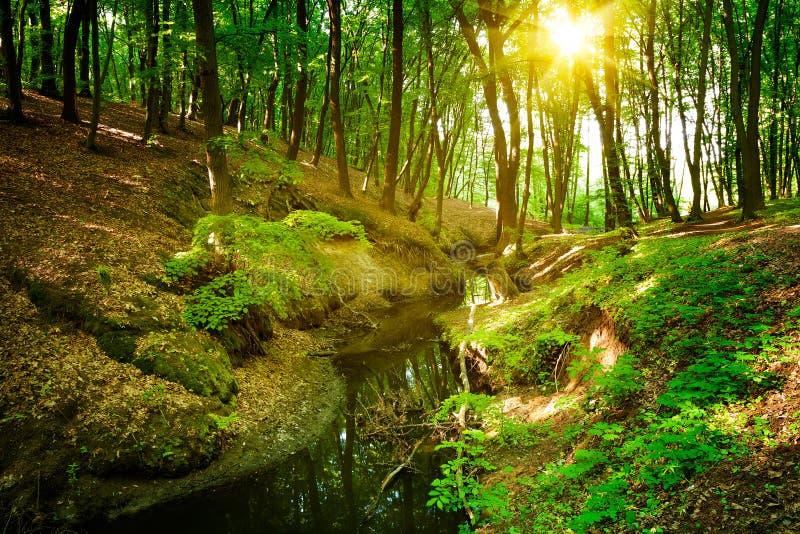 Rio da floresta foto de stock royalty free