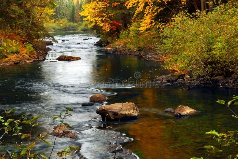 Rio da floresta na queda foto de stock