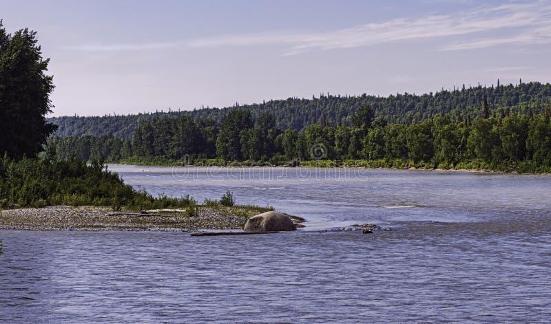 Rio da fonte no parque nacional de Denali em Alaska imagem de stock royalty free