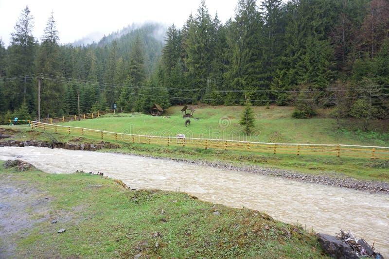 Rio da montanha ap?s a chuva nos Carpathians imagem de stock