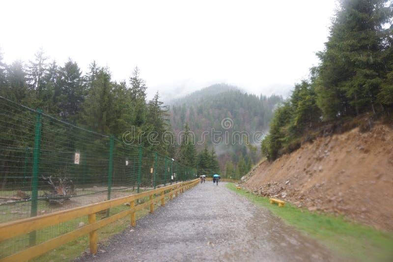 Rio da montanha ap?s a chuva nos Carpathians foto de stock royalty free