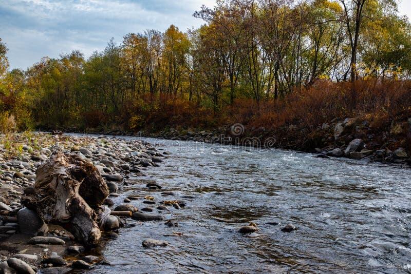 Rio da montanha com as árvores em um lado e na praia rochosa imagens de stock