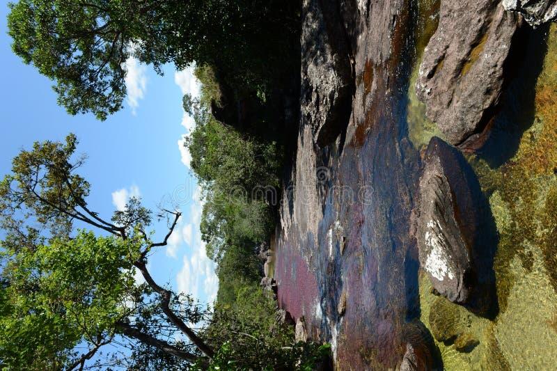 Rio da montanha de Canio Cristales colômbia foto de stock royalty free