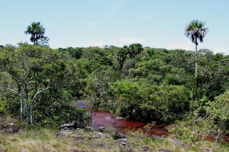 Rio da montanha de Canio Cristales colômbia imagem de stock royalty free