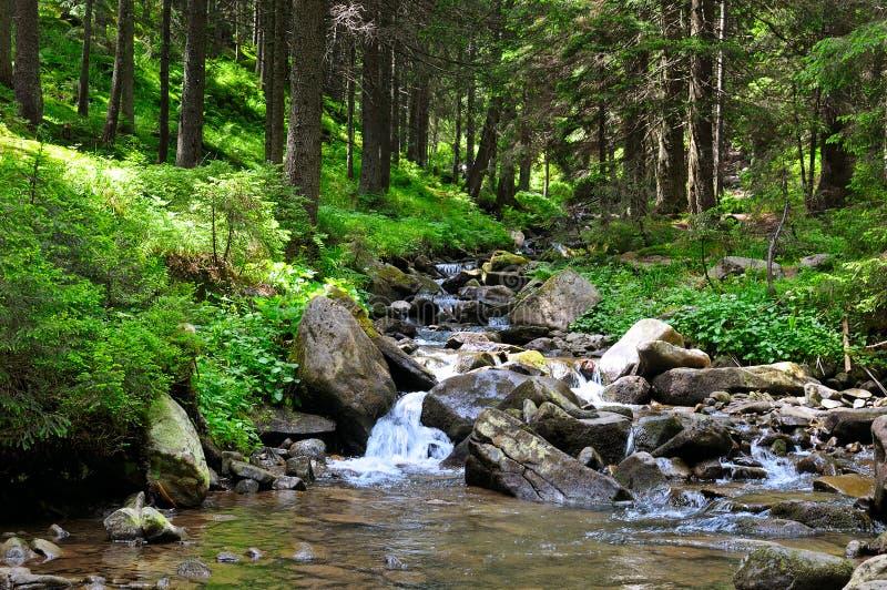 Rio da montanha e floresta con?fera em uma costa rochosa Cena pitoresca e lindo fotografia de stock royalty free