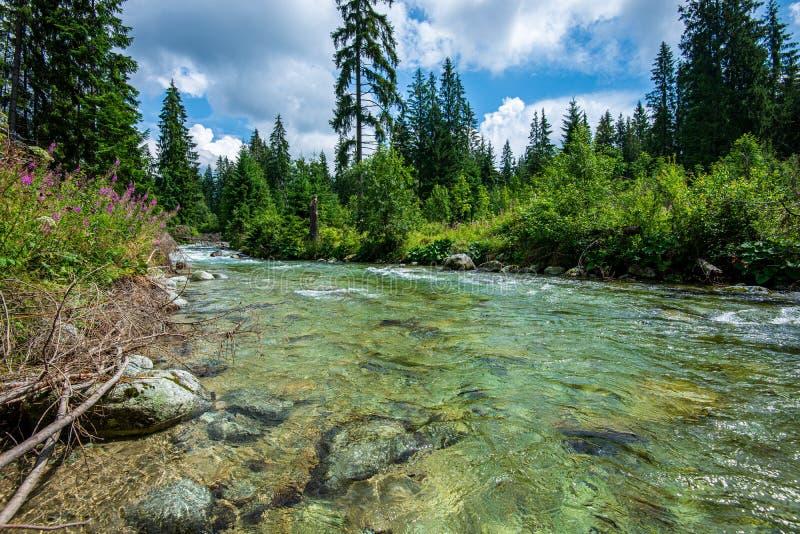 rio da montanha da floresta com a cachoeira sobre as rochas fotografia de stock royalty free