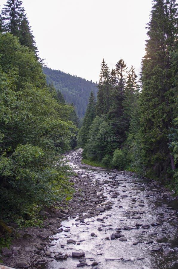 Rio da montanha na floresta imagens de stock