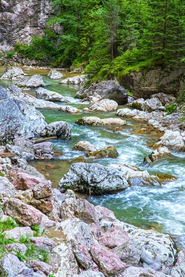 Rio da montanha rochosa no verão imagem de stock