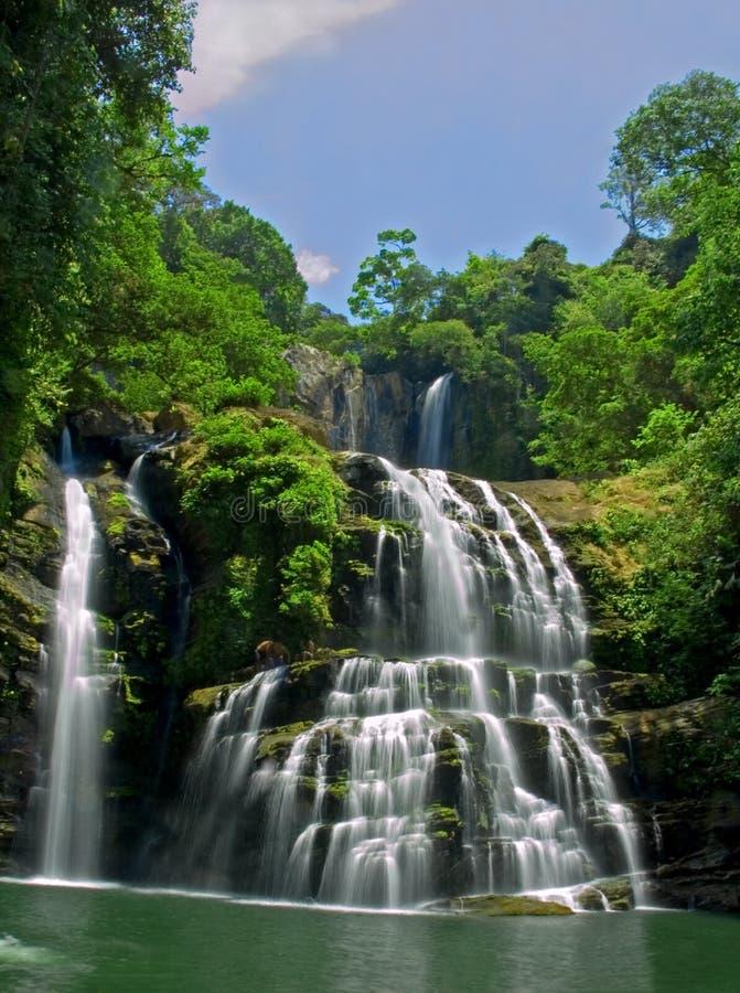 Rio da selva fotografia de stock royalty free