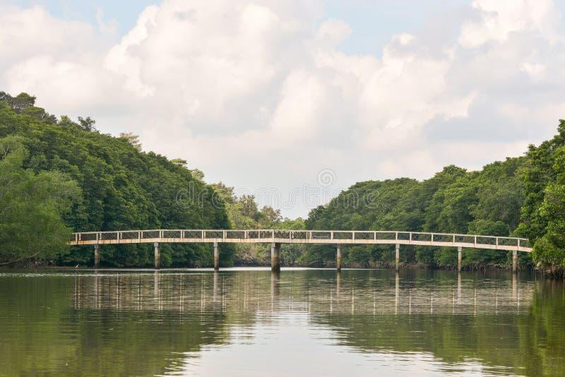 Rio da selva, Brunei Darussalam fotos de stock