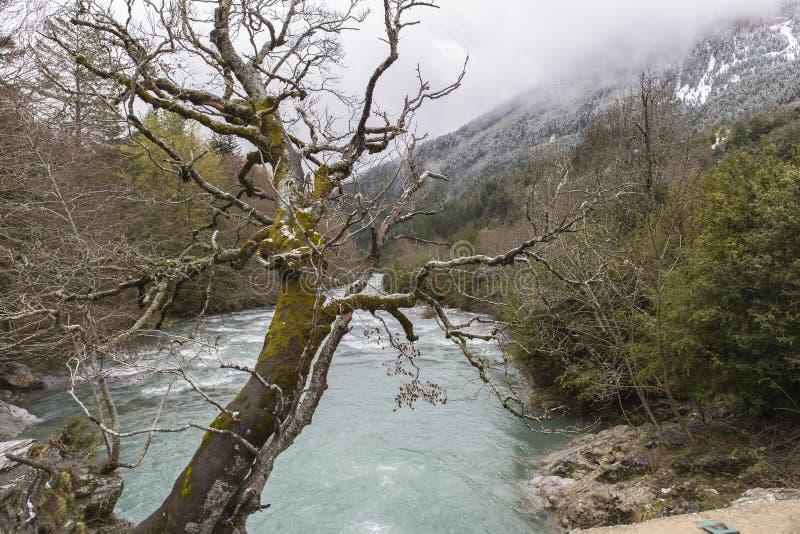 Rio das aros no vale de Bujaruelo com alguma neve na montanha e uma árvore no midle fotografia de stock royalty free