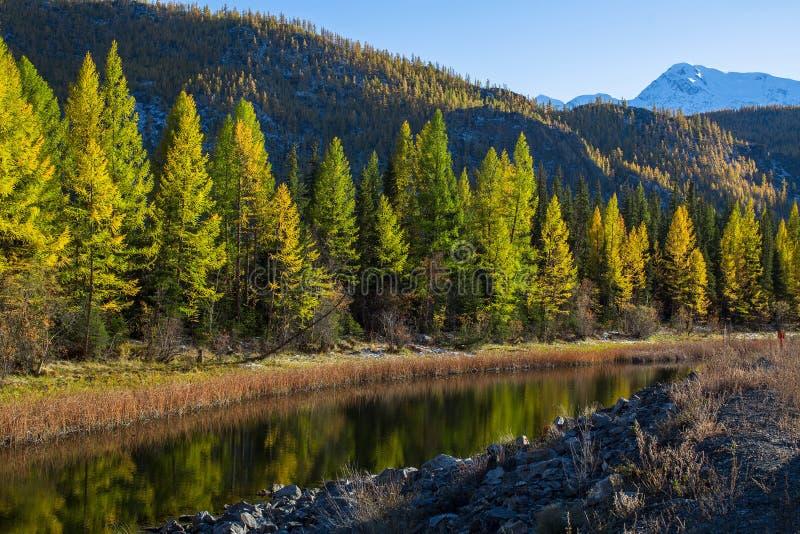 Rio das montanhas de Altai, Rússia de Katun nave fotos de stock