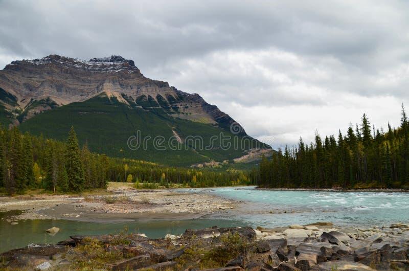 Rio de Athabasca na via pública larga e urbanizada de Icefields imagem de stock