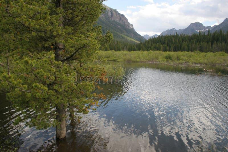 Rio de Gallantin em Bozeman, Montana EUA fotografia de stock