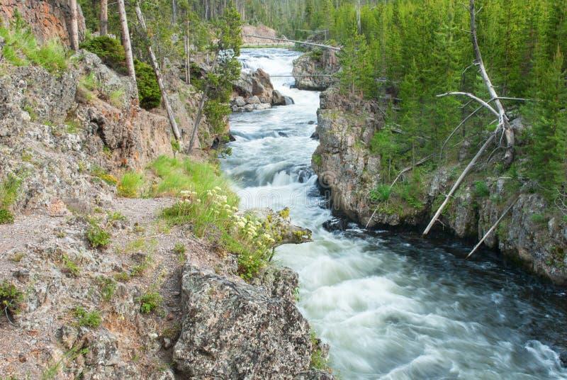 Rio de Gibbon no parque nacional de Yellowstone, Wyoming, EUA foto de stock royalty free