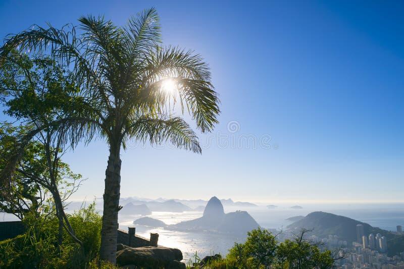 Rio de Janeiro Brazil Sunrise Palm-de Berg van Boomsugarloaf stock foto