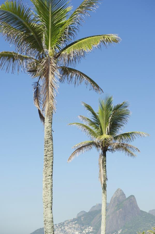 Rio de Janeiro Palm Trees Two broderberg Brasilien arkivfoton