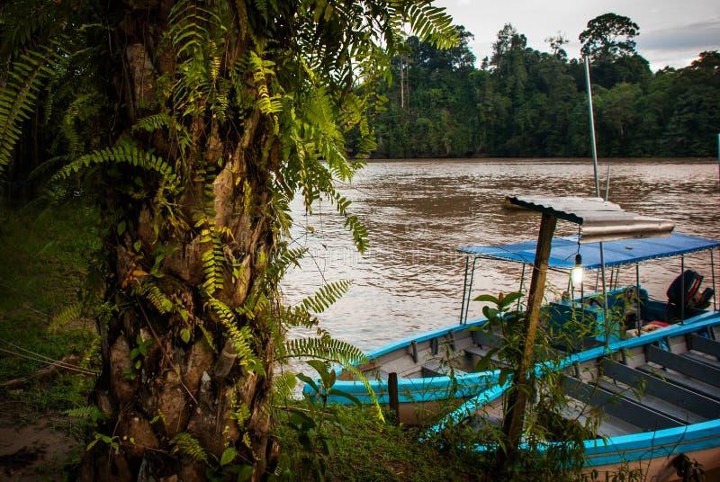 Rio de Kinabatangan, Bornéu, Sabah Malaysia Paisagem da noite das árvores, da água e dos barcos imagens de stock