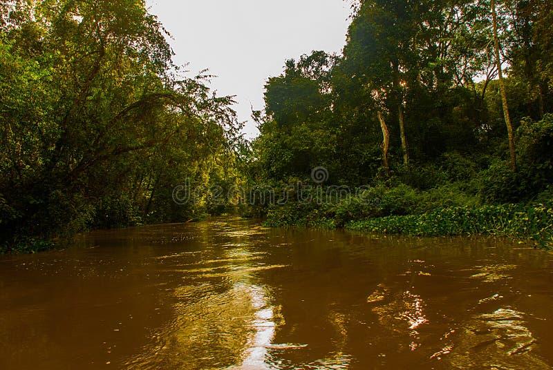 Rio de Kinabatangan, floresta úmida da ilha de Bornéu, Sabah Malaysia fotos de stock royalty free