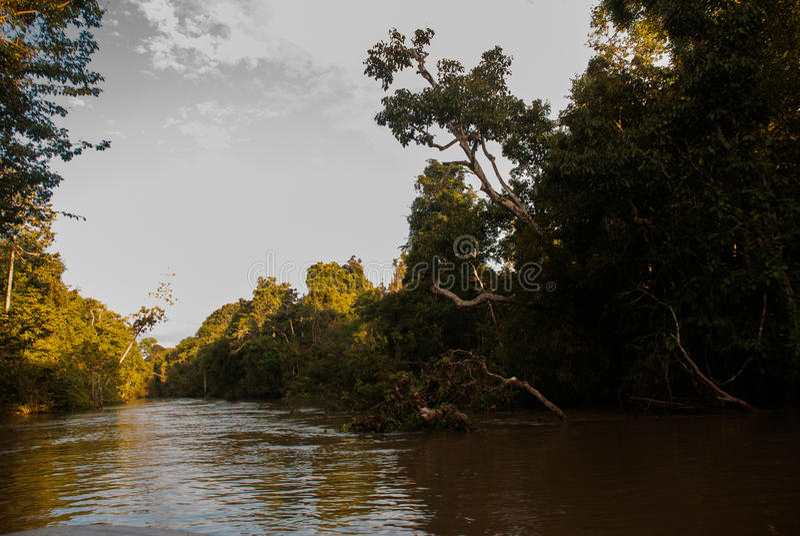 Rio de Kinabatangan, floresta úmida da ilha de Bornéu, Sabah Malaysia Paisagem da noite das árvores perto da água fotografia de stock