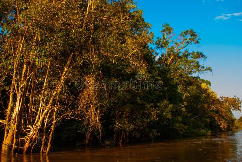 Rio de Kinabatangan, floresta úmida da ilha de Bornéu, Sabah Malaysia Paisagem da noite das árvores perto da água imagem de stock