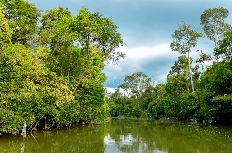 Rio de Kinabatangan, Malásia, Bornéu imagem de stock