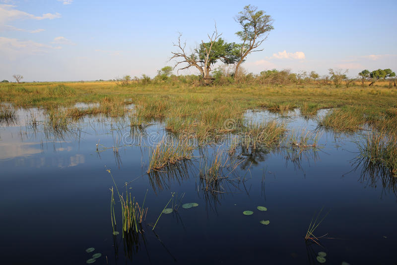 Rio de Kwando imagem de stock