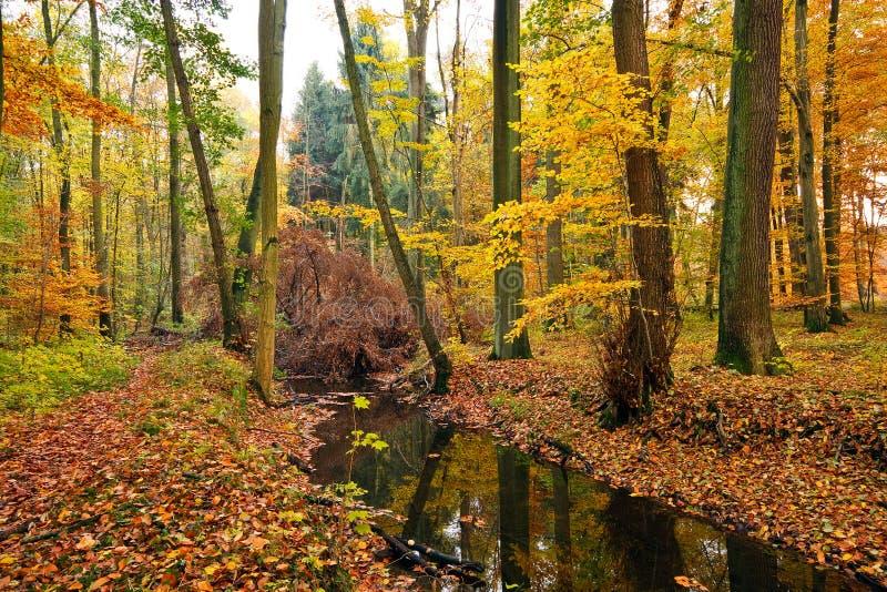 Rio de madeira na floresta do outono imagem de stock