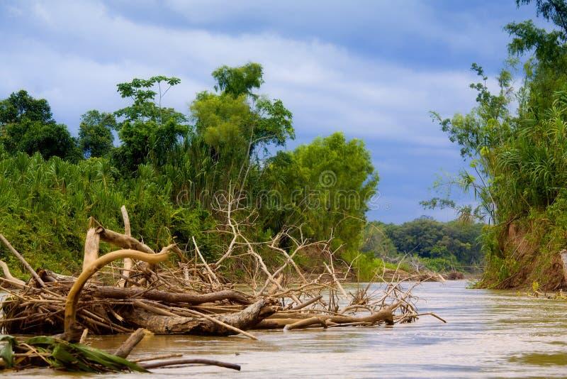 Rio de Manu fotografia de stock royalty free
