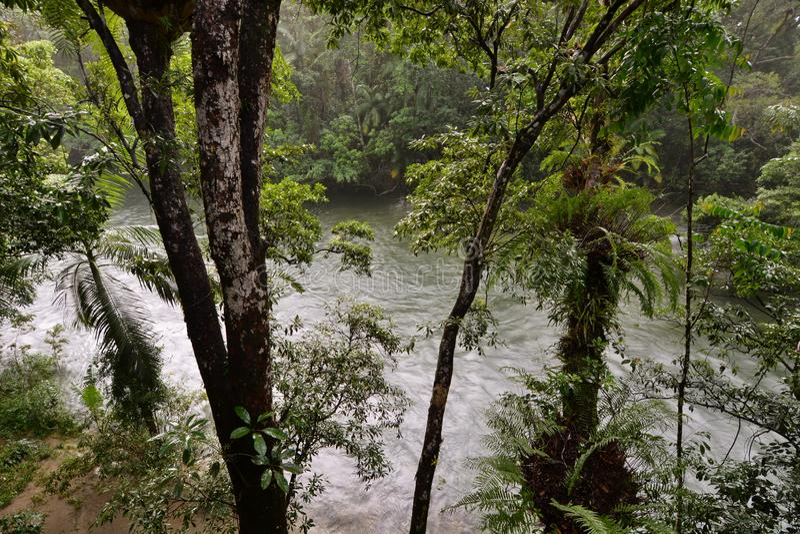 Rio de Mossman Condado de Douglas queensland austr?lia imagens de stock royalty free