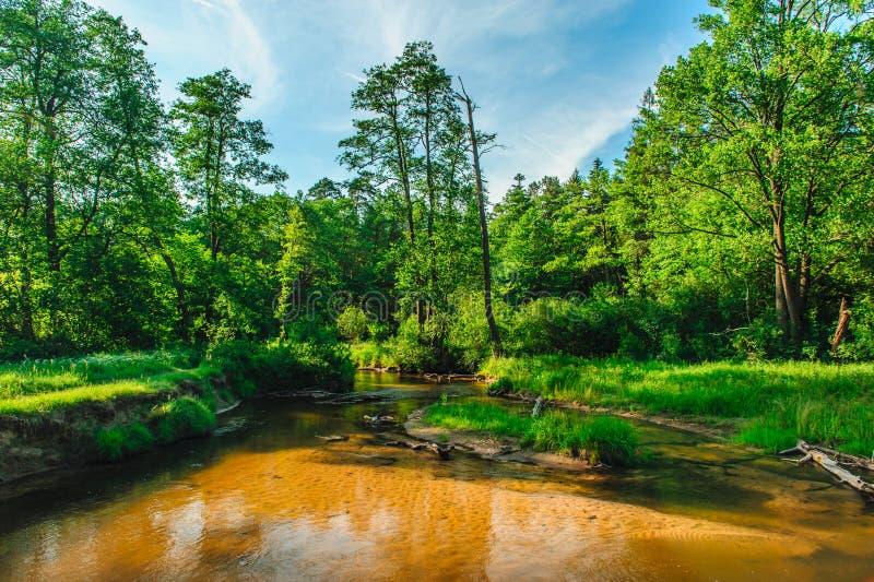 Rio de Tanew que meandring entre prados imagens de stock