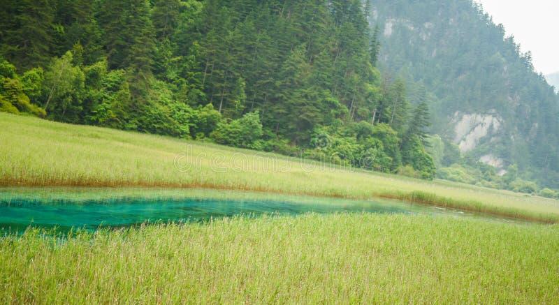 Rio do jade do parque nacional do vale de Jiuzhai fotos de stock