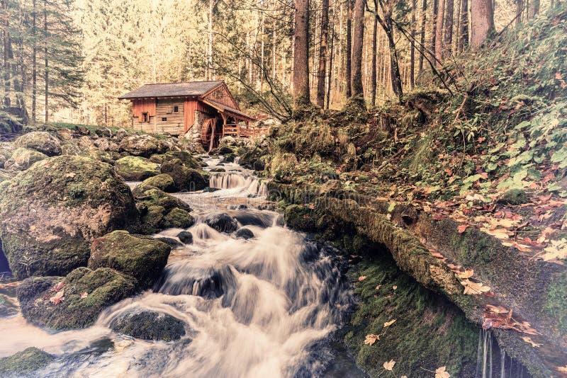 Rio do vintage em Autumn Forest fotografia de stock