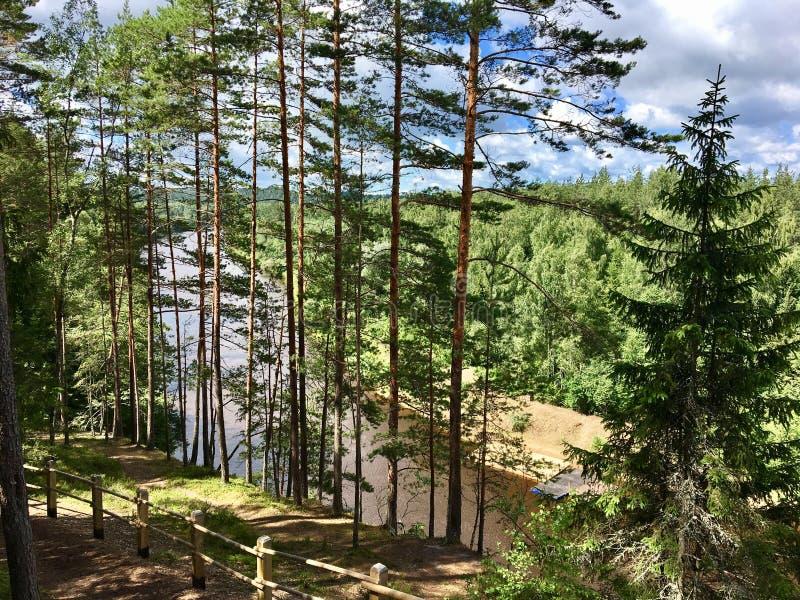 Rio e floresta ao lado do rio Gauja fotografia de stock