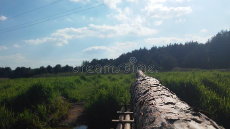 Rio e floresta poloneses imagem de stock